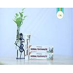 kem-danh-rang-duoc-lieu-an-do-patanjali-herbal-toothpaste-p32860055.html?spid=32860056