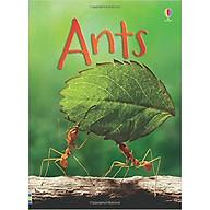 Usborne Ants thumbnail