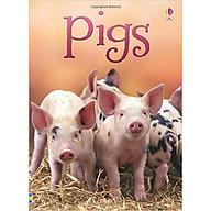 Usborne Pigs thumbnail