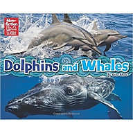 Dolphins and Whales In A Box thumbnail