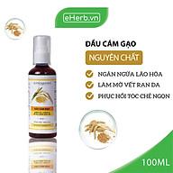 Dầu Cám Gạo Nguyên Chất Dưỡng Da - Tóc - Môi MILAGANICS 100ml (Chai) thumbnail