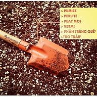 Đất trồng sen đá xương rồng (1kg) thumbnail