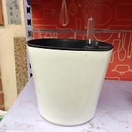 CHẬU TỰ DƯỠNG THÔNG MINH Trồng cây nội thất để bàn, tự tưới thẩm thấu, có phao báo nước, nhựa ABS cao cấp an toàn, 3 màu lựa chọn thumbnail