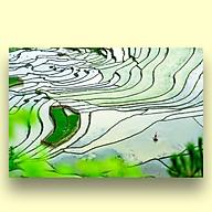 Tranh Treo Tường Canvas Phong Cảnh Ruộng Bậc Thang Vùng Cao Tây Bắc Việt Nam - Công Nghệ In UV Nhật Bản - Màu Sắc Đẹp Rõ Nét thumbnail