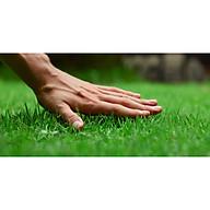 Bộ 10 gói Hạt giống cỏ nhung nhật-cho 50m2 thumbnail