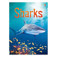 Usborne Sharks thumbnail