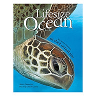 Lifesize Ocean thumbnail