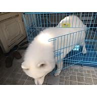Chuồng cho chó con Xudapet - giao màu ngẫu nhiên - XDP01CCC thumbnail