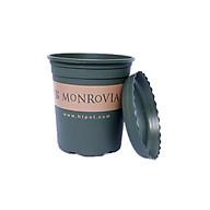 Chậu Nhựa Monrovia trồng cây (hoa hồng) 1 GL thumbnail