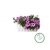 Chậu nhựa trồng hoa ốp tường- Chất liệu nhựa nguyên sinh, dày và bền chắc - Kích cỡ D42xR18xC22cm-TẶNG HAI MÓC TREO INOX thumbnail