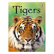 Usborne Tigers thumbnail