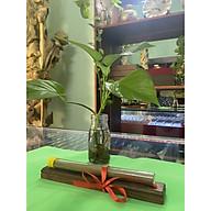 Combo Gồm 1 ống nhang Trầm Hương cao cấp và 1 hộp đốt thanh nhang bằng gỗ hương cao cấp thumbnail