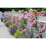 Giấy dán tường - Hoa H309 thumbnail