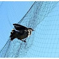 Lưới bẫy chim cu gáy 7cm cao 7m thumbnail