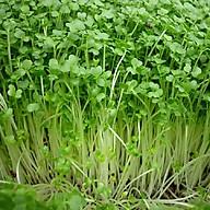 Hạt giống rau mầm củ cải 50gr - Trắng đỏ thumbnail