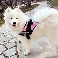 Yếm Đai Chó K9 Có Đai Ngực Phản Quang - Màu Ngẫu Nhiên thumbnail
