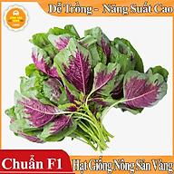 Hạt giống Rau Dền Tía - Rau Dền Mùa Vụ Quanh Năm, Tỉ Lệ Nảy Mầm Cao ( gói 20gram ) - Hạt giống Nông Sản Vàng thumbnail