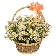 Giỏ hoa tươi - Vạn sự may mắn 3990 thumbnail