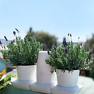 Chậu Để Bàn Thông Minh Tự Động Tưới và Tự động bón phân trong 2 tháng Minigarden Basic S Pots (1 bộ gồm 1 bình chứa nước, 2 chậu trồng và 3 túi dinh dưỡng). Phù hợp trồng cây trong gia đình, văn phòng với thiết kế gọn nhẹ, sang trọng và ít chăm sóc cây thumbnail