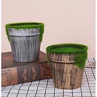 Chậu nhí cắm hoa phủ rêu xanh thumbnail