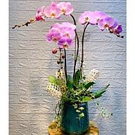 Chậu hoa Lan Hồ Điệp Đà Lạt - Mẫu 79 - Đường kính 25 x cao 70 cm - Mầu Tím - Chậu hoa, cây cảnh tặng khai trương, tân gia thumbnail