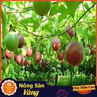 Hạt giống Chanh Dây ( Gói 50 Hạt ) - Nông Sản Vàng thumbnail