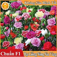 Hạt giống Hoa Cẩm Chướng Kép Mix Màu ( Gói 100 hạt ) thumbnail