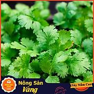 Hạt giống Rau Ngò Ta (Ngò Rí) ( Gói 20 Gram ) - Nông Sản Vàng thumbnail