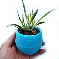 Chậu nhựa tròn thông minh trồng cây để bàn - 10 chậu thumbnail