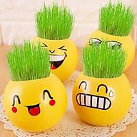 Chậu cỏ (tưới nước là lên cỏ) icon mặt cười trang trí bàn kệ tủ - Hình ngẫu nhiên thumbnail