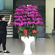 Chậu hoa Lan Hồ Điệp Đà Lạt - Mẫu 31 - Đường kính chậu 60 x cao 170 cm - Mầu Tím - Chậu hoa, cây cảnh tặng khai trương, tân gia thumbnail