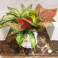 Chậu trồng cây trong nhà cao cấp Minigarden Basic Pot S (Combo 5 chậu) nhập khẩu Châu Âu, Nhựa PP Chống UV, có khả năng tự hút nước và thoát nước giúp cây sống tốt mà không cần chăm sót thumbnail