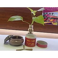 Combo nhang nụ Trầm hương đặc biệt- Gồm 1 hộp nhang nụ Trầm 50v Đặc Biệt+ 1 lư đốt thumbnail