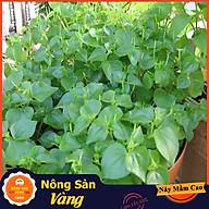 Hạt giống Rau Càng Cua ( Gói 0,5 Gram ) - Nông Sản Vàng thumbnail