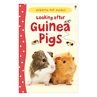 Usborne Pet Guides Looking after Guinea Pigs thumbnail