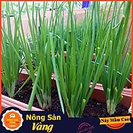 Hạt giống Hành Lá ( Gói 1 Gram ) - Nông Sản Vàng thumbnail