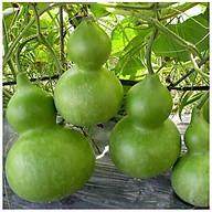 Hạt giống Bầu hồ lô ngắn ngày - 10 hạt thumbnail
