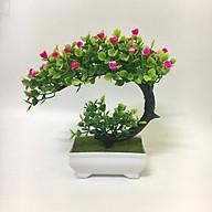 Chậu cây bonsai phú quý - Chậu cây cảnh để bàn thumbnail