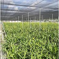 Lưới Che Nắng , Che Rau Lưới Che Vườn Lan 70% , 2m x 15m thumbnail