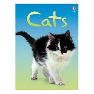 Usborne Cats thumbnail
