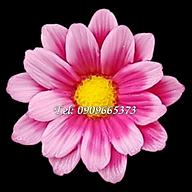 Khuôn silicon làm rau câu hoa cúc công chúa Mã số 1586 thumbnail