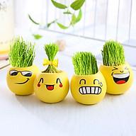 Chậu trồng cây mini hình mặt cười ngộ nghĩnh kèm hạt giống (Giao ngẫu nhiên mặt và hạt giống) thumbnail