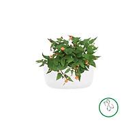 Chậu nhựa ốp tường-Chậu hoa ốp tường trồng cây-Chậu cây-Kích thước D28xR16xC13cm-TẶNG HAI MÓC TREO INOX thumbnail
