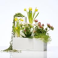 Bộ 10 chậu trồng cây thông minh LEGROW - Limitless Creations thumbnail