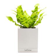 Chậu trồng cây thông minh LEGROW - Growing Pot thumbnail