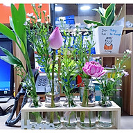 Sét 5 lọ hoa thuỷ tinh kèm kệ gỗ thumbnail