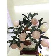 Cây đào đá Thạch anh hồng 9 quả khổng lồ - 7kg - 48cm thumbnail