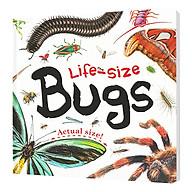 Life-Size Bugs thumbnail