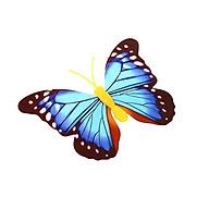 Đèn ngủ hình bướm nhiều màu sắc thumbnail