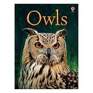 Usborne Owls thumbnail